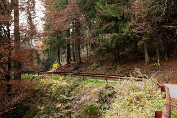 Tra le Foreste di Bergamo - Lombardia
