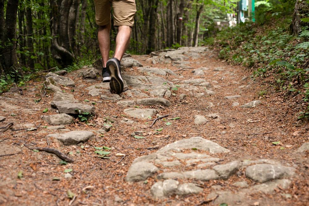 Trekking foreste del Casentino - Passi dell uomo