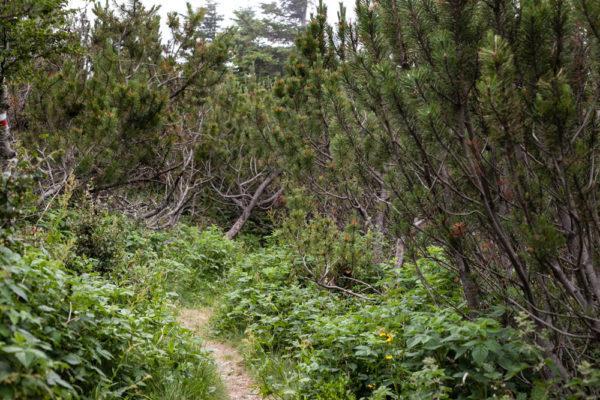 Vegetazione e Cespugli
