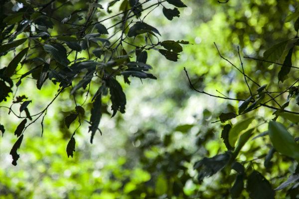 Verde e scorci