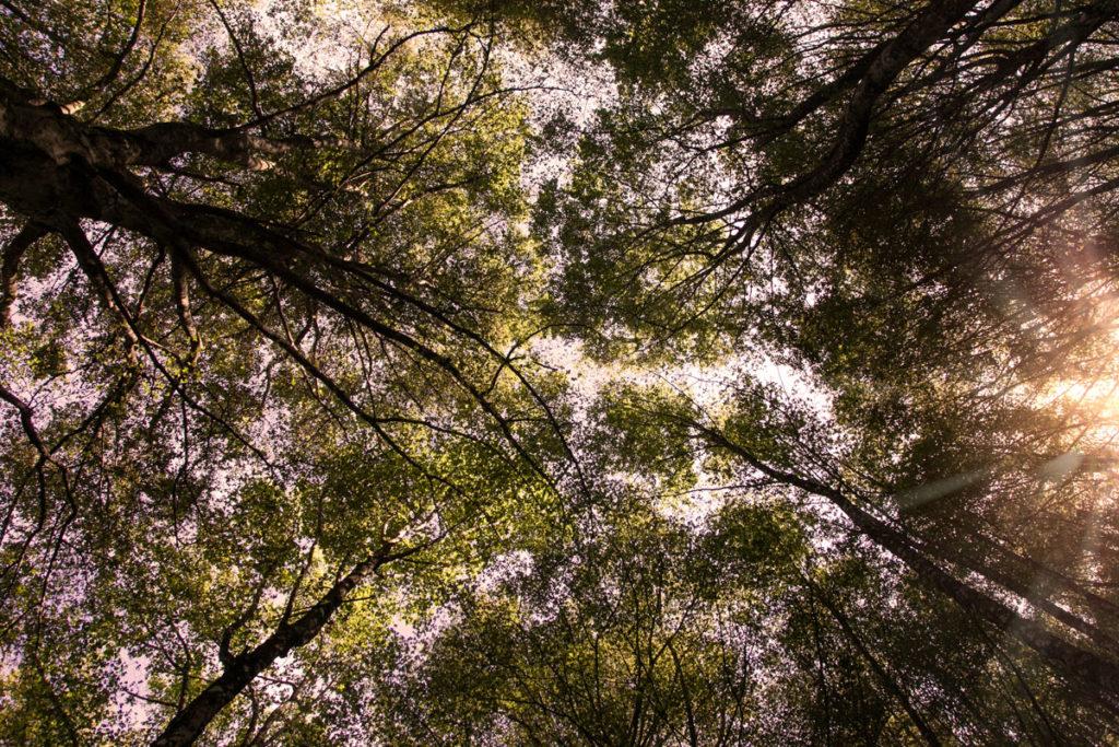 Il cielo in mezzo alla foresta