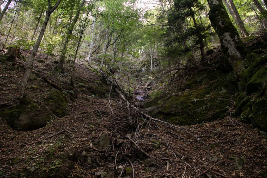 Natura Selvaggia sul sentiero 229