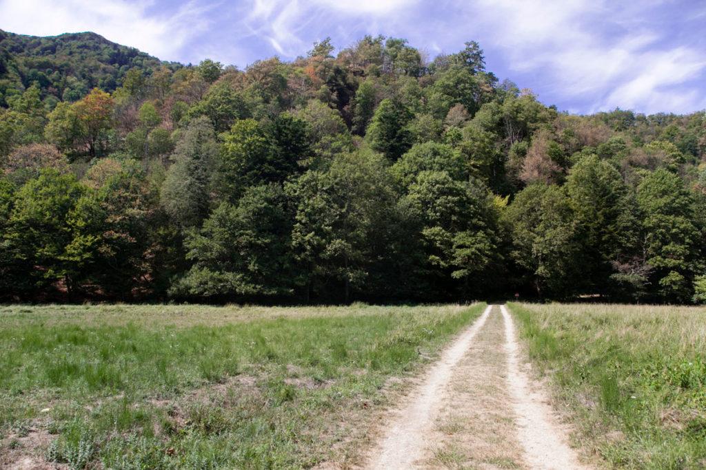 Prato nella Foresta della Lama