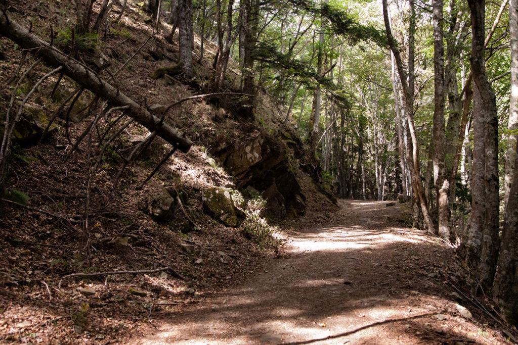 Salita degli Acuti - Sentiero Trekking 229