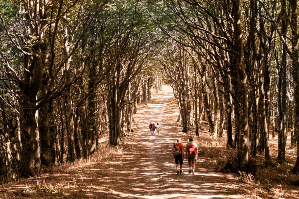 Sentiero CAI 00 - Verso prato alla Penna