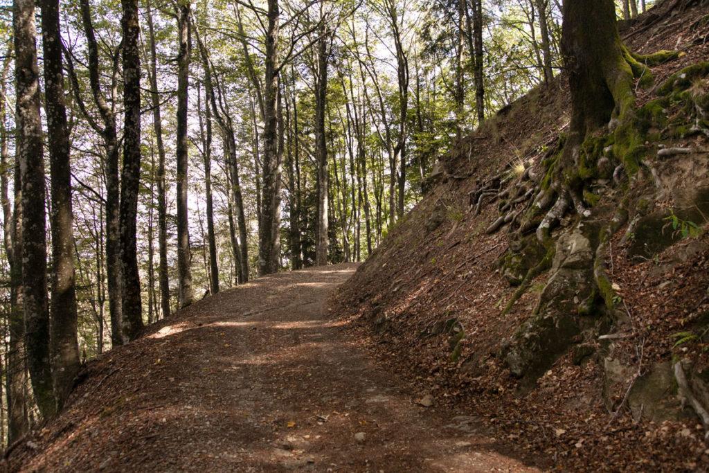 Sentiero degli Acuti - la Salita in mezzo alla natura autunnale