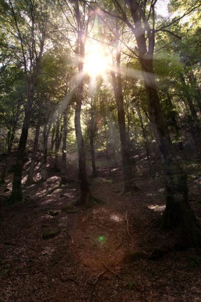 Sole che filtra tra gli Alberi