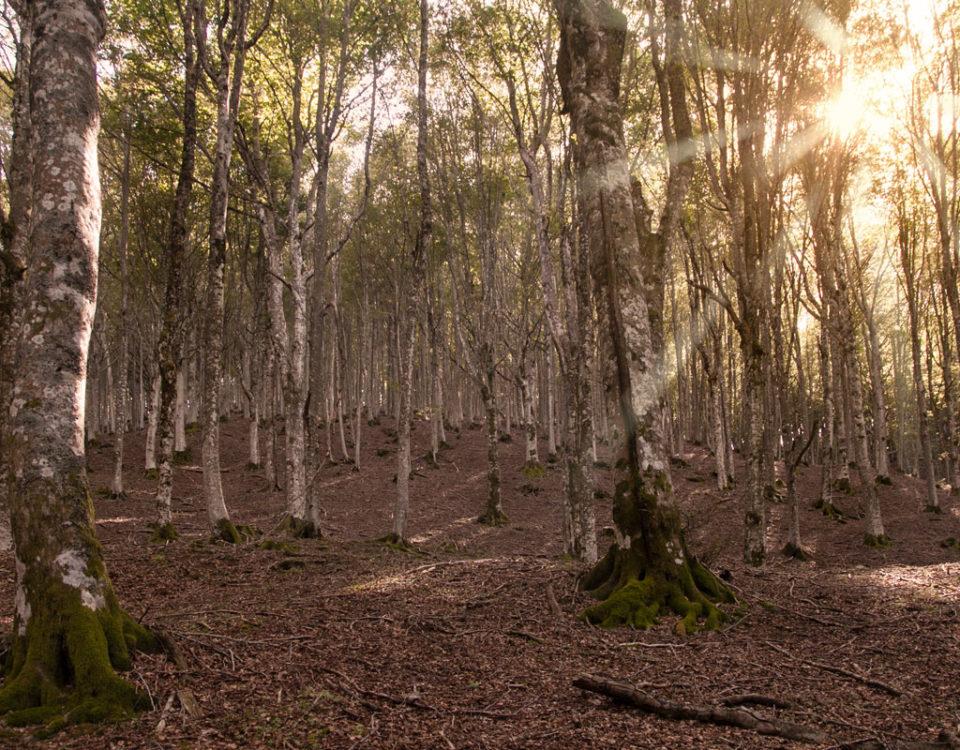 Tramonto nelle Foreste Casentinesi - Quale trekking fare