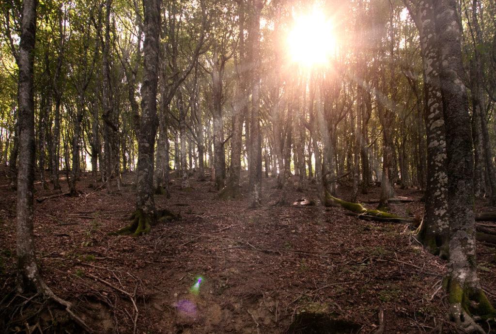 Tramonto nelle foreste casentinesi
