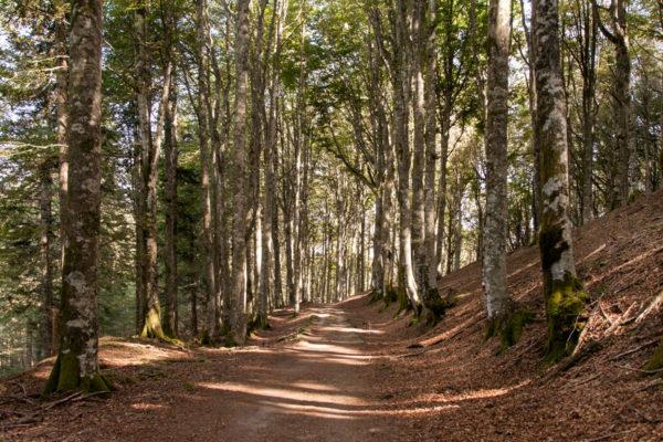 Trekking nelle Foreste Casentinesi - Verso il rifugio dei Fangacci