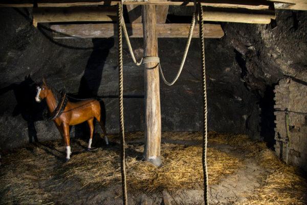 Cavalli che movimentavano i vagoni di estrazione del gesso