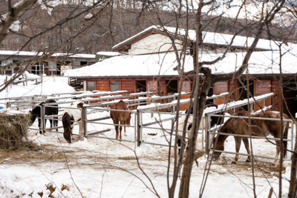 Cavalli tra la Neve