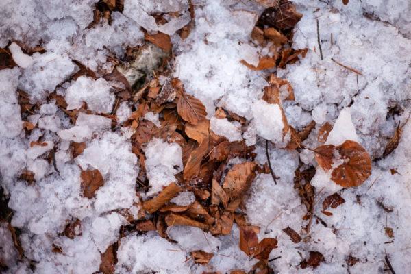 Foglie Secche e Neve