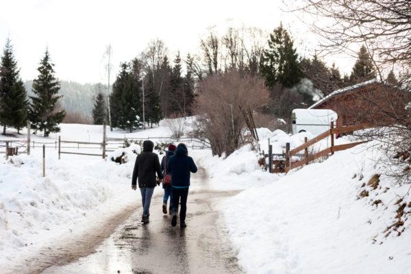 Passeggiata Verso la Malga Somator tra la Neve