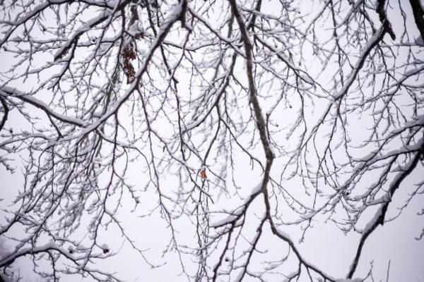 Rami Innevati duranta nevicata