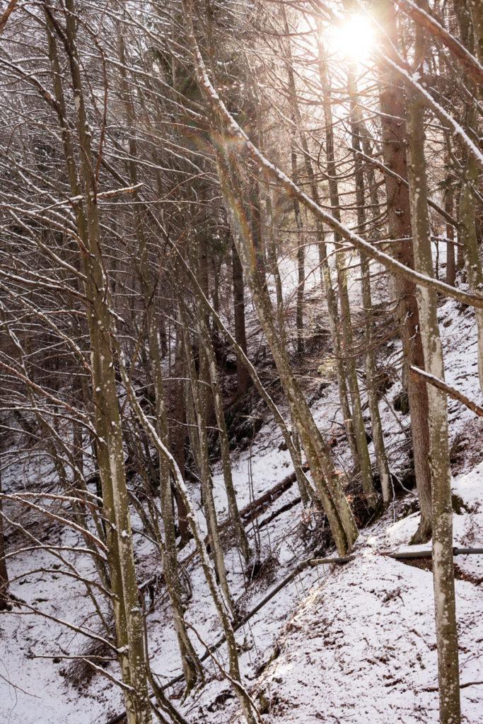 Sole Tra gli alberi del bosco