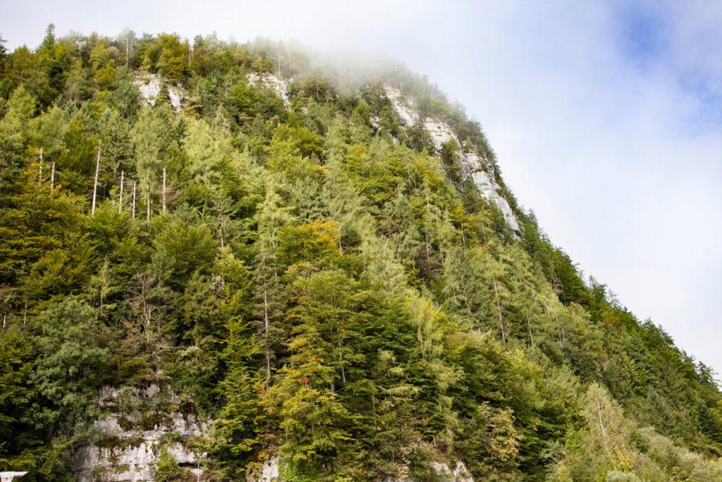 Alberi sulla montagna