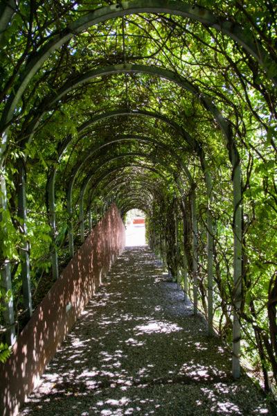 Tunnel verde nel parco