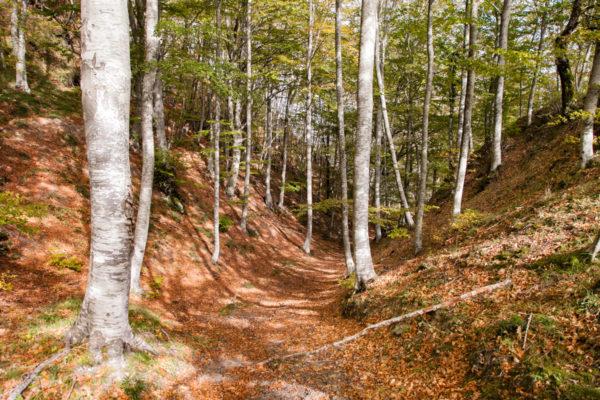 Autunno e le foglie a terra durante il trekking sul Monte Carpano