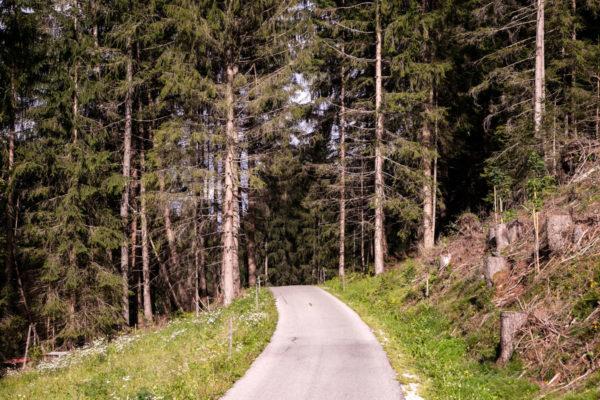 Boschi nell'Alta Pusteria - Ciclabile San Candido Lienz