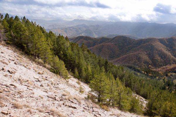 Crinale della Montagna - Monte Carpano