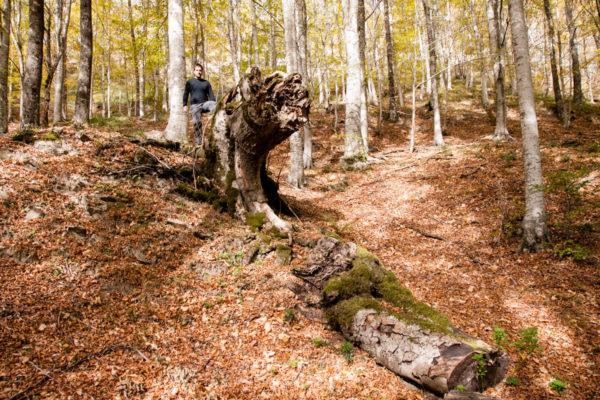 Foreste Appenino Romagnolo - Bagno di Romagna