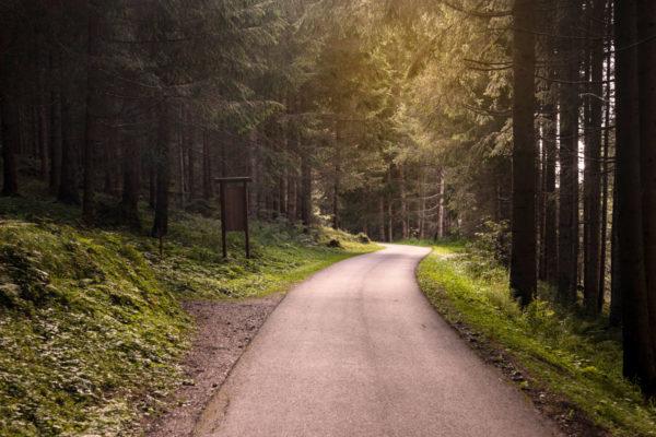 Pista Ciclabile in mezzo al bosco