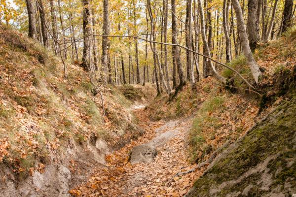 Trekking in autunno - Bagno di Romagna Monte Carpano
