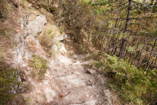 Trekking nella natura - Camminate nelle foreste romagnole
