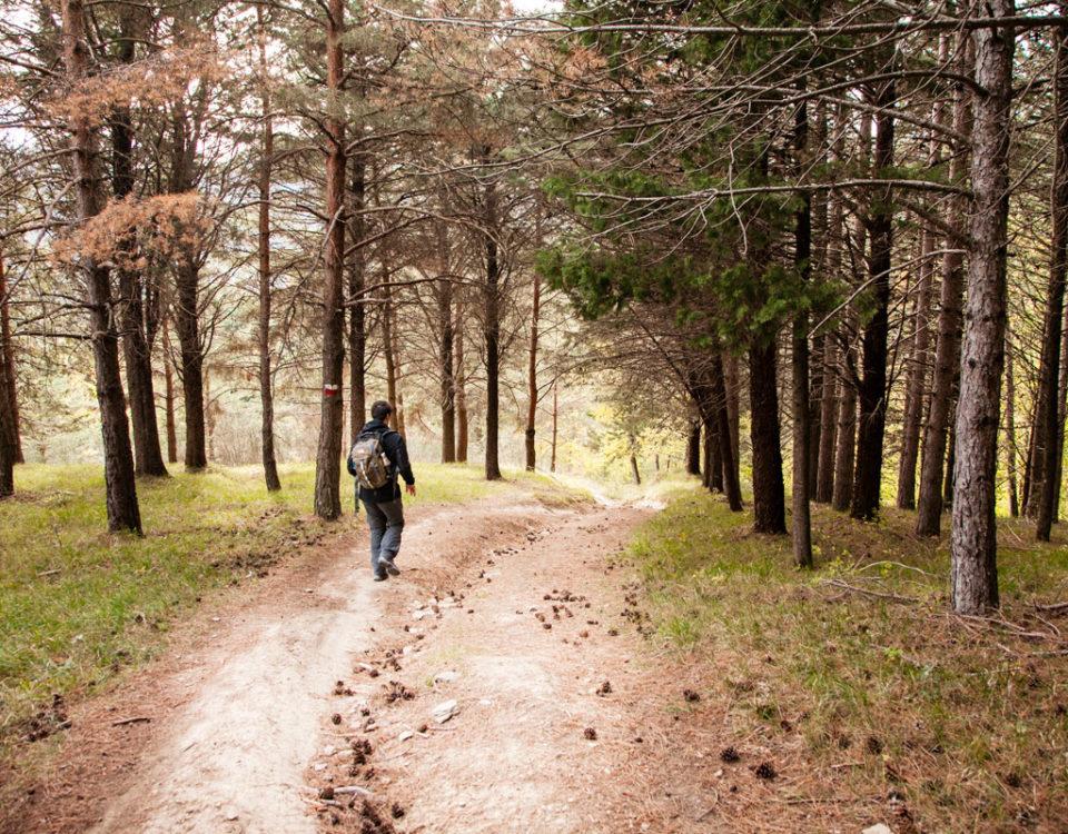 Trekking sentiero CAI 201 verso Bagno di Romagna