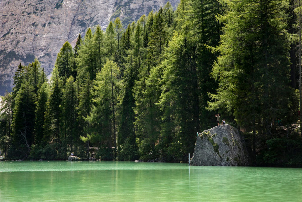 Alberi e Roccia sul lago - provincia di Bolzano