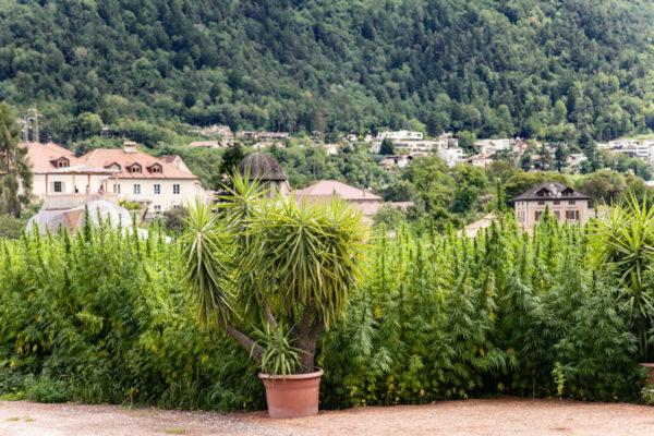 Giardino di Canapa di Bressanone