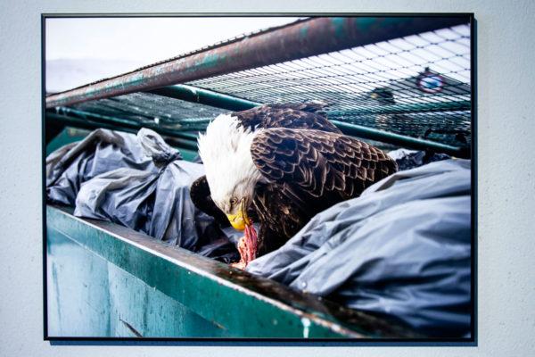 Corey Arnold - Dumpster Diver - 1° Premio Natura WPP 2018