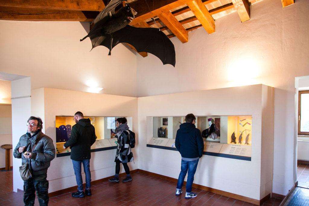 Museo dei Pipistrelli al centro Visite delle Grotte di Onferno