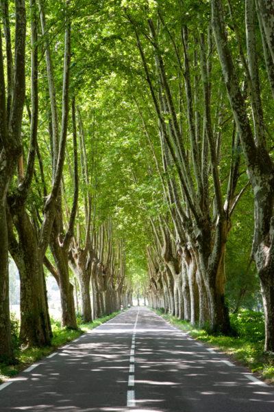 Splendida Strada Alberata in Provenza