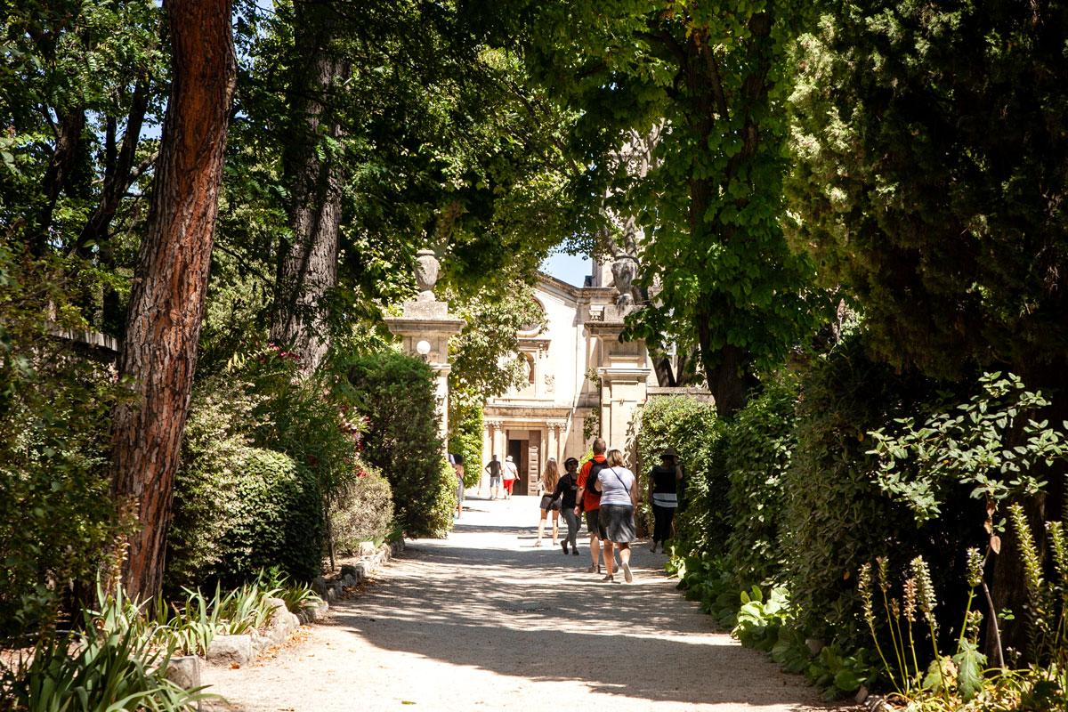 Viale di Ingresso a Saint Paul de Mausole - manicomio van Gogh