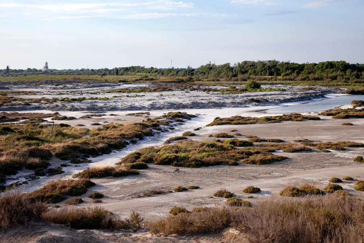 Arbusti e sale depositato nella Salin de Giraud - Camargue