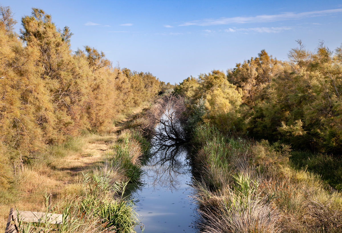 Natura incontaminata - Area paludosa della Camargue