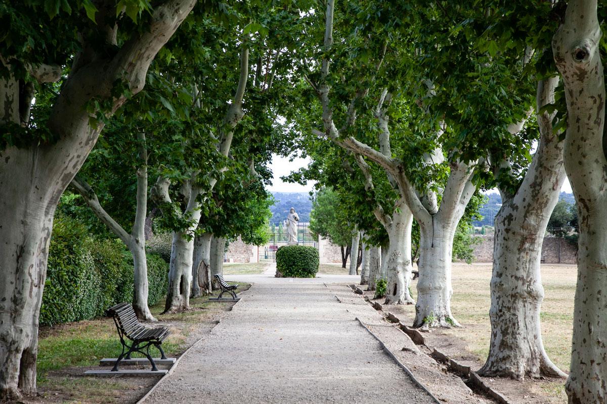 Viale alberato dei Jardin de l'Enclos - Saint Maximin La Sainte Baume