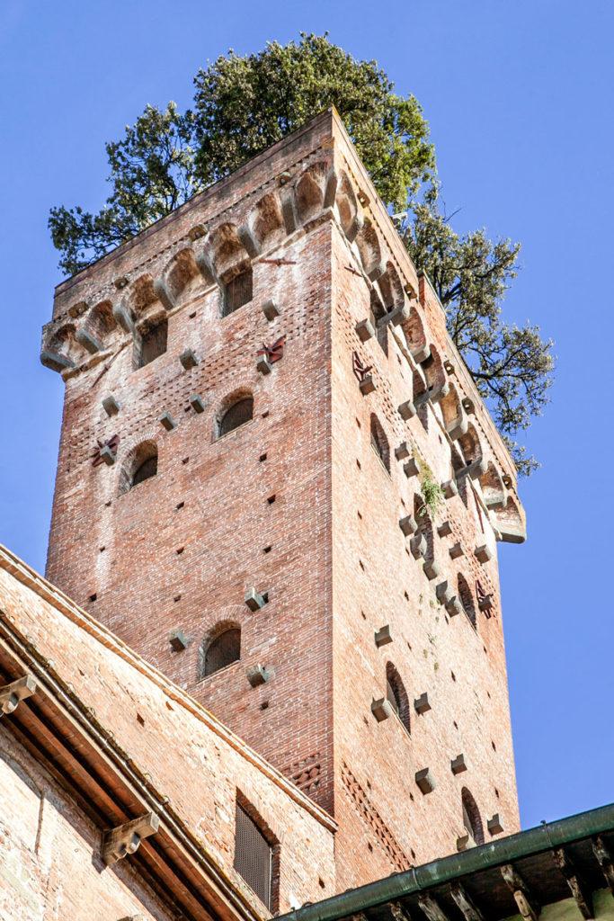 Alberi sulla Torre Guinigi a Lucca
