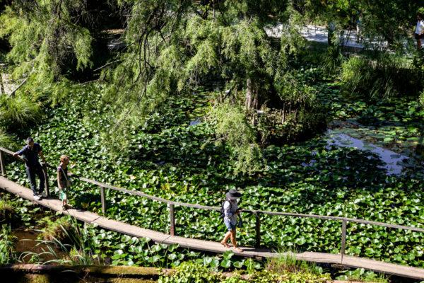 Orto Botanico di Lucca voluto dalla duchessa Maria Luisa di Borbone