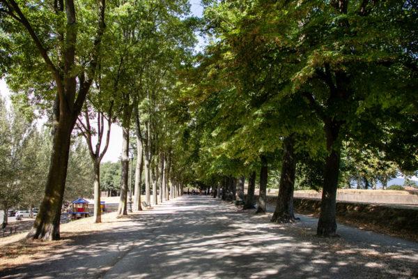 Passeggiata sulle Mura di Lucca