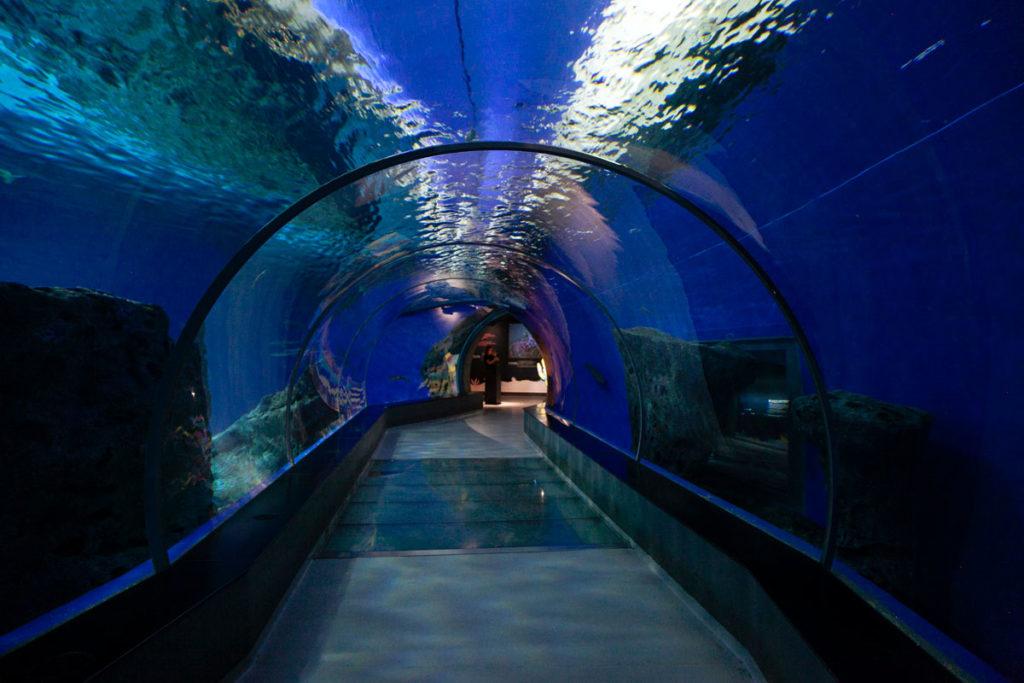 Tunnel dentro le vasche - Den Bla Planet