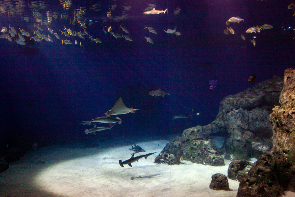 Vasca Gigante acquario di Copenaghen con razze e squaletti