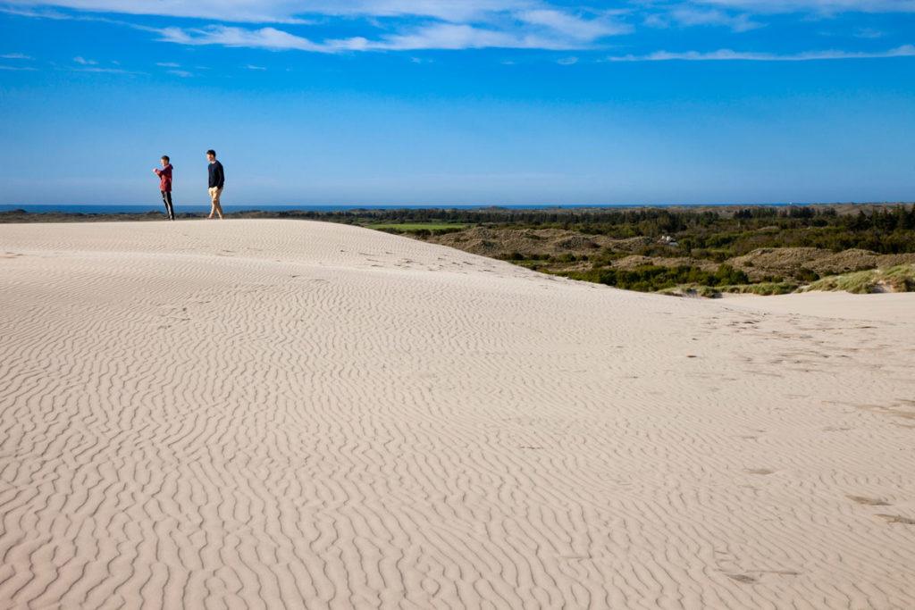 Altopiano di dune di sabbia mobili - Natura nel nord dello Jutland