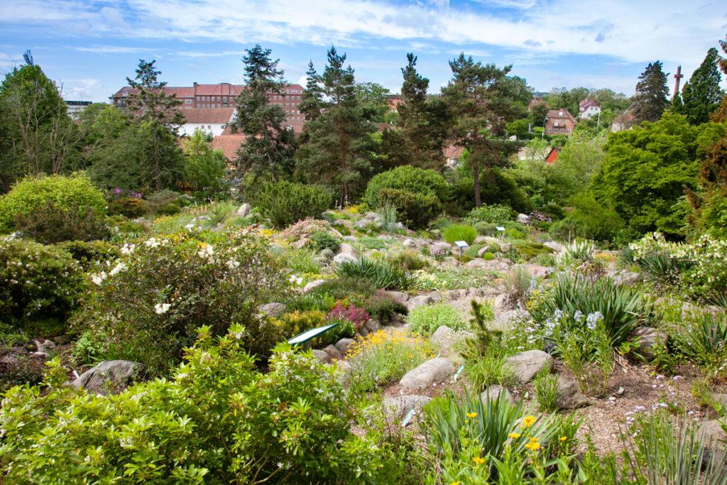 Giardino Botanico sulla collina di Aarhus
