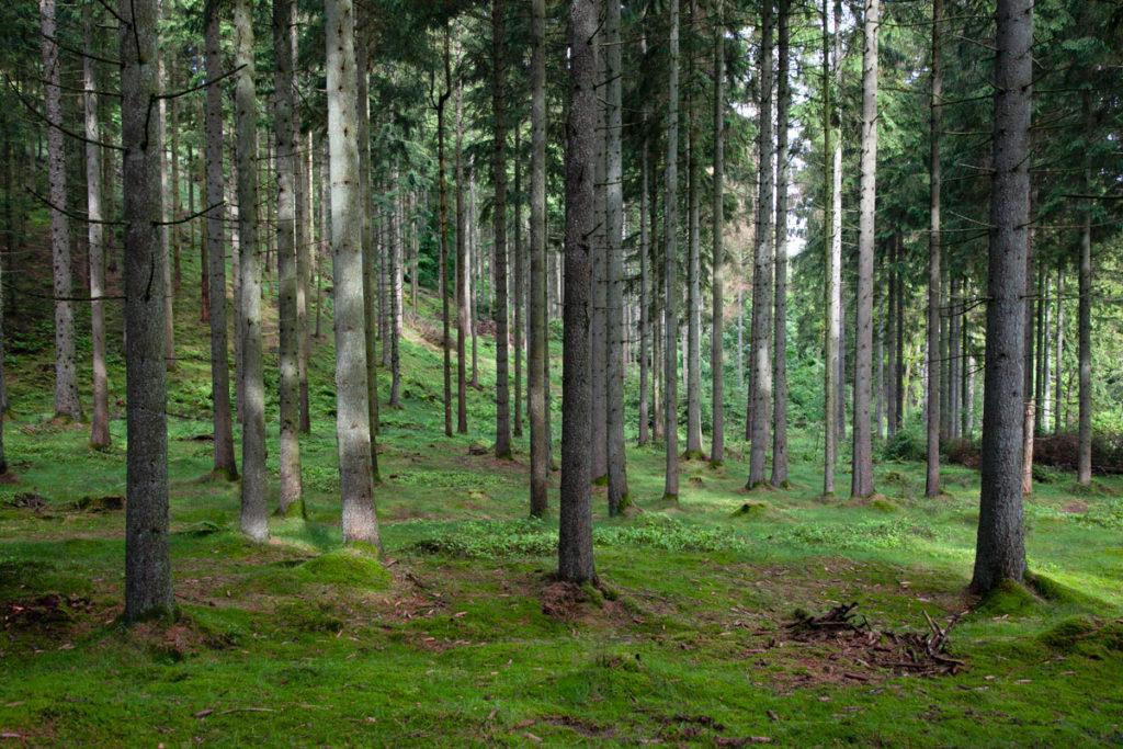 La foresta di Rold Skov - Danimarca