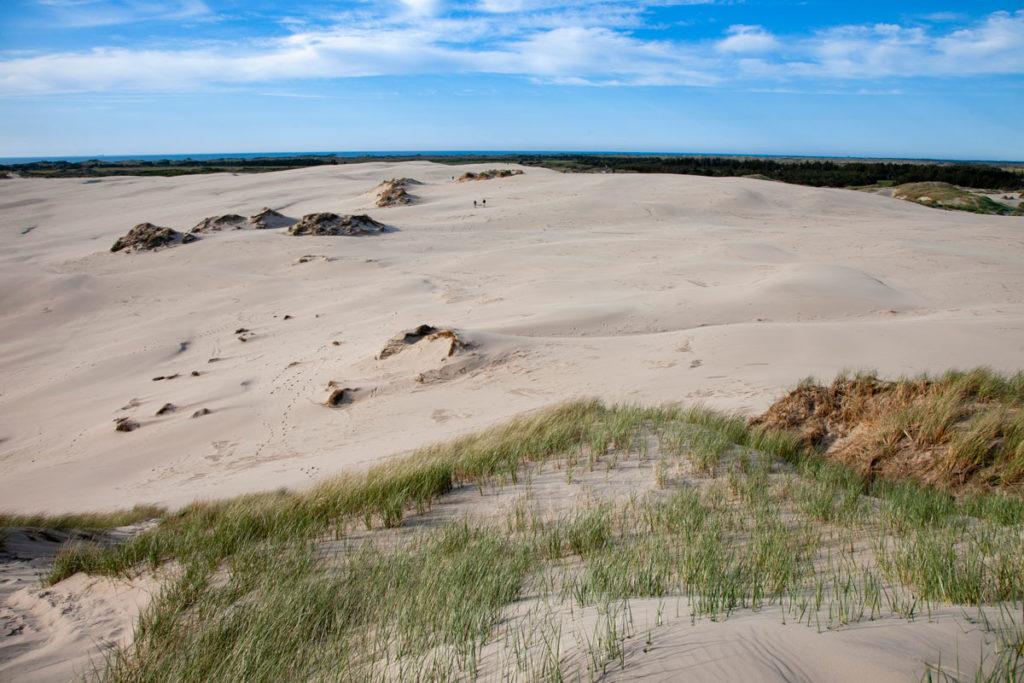 Le alte dune di sabbia mobili in Danimarca - Rabjerg Mile