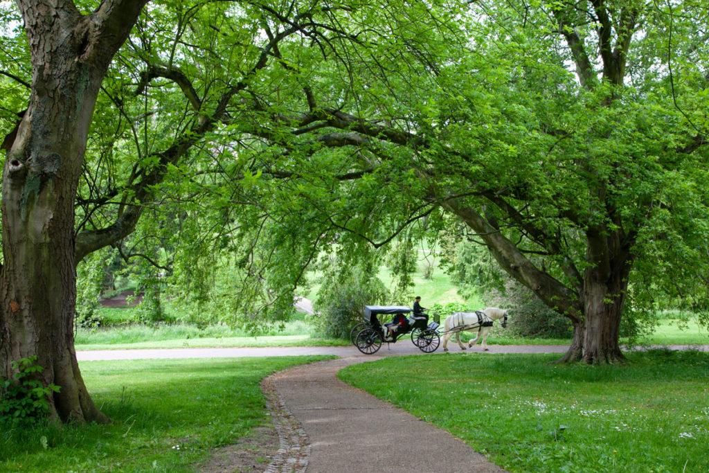 Passaggio di una carrozza nel giardino botanico