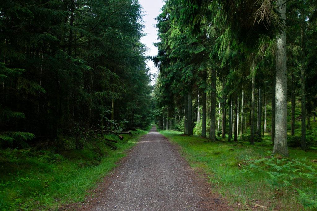 Rold Skov - Foresta più grande della Danimarca